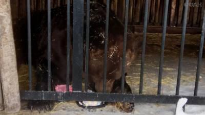 Медведя Умку из самарского зоопарка поздравили с 23-летием