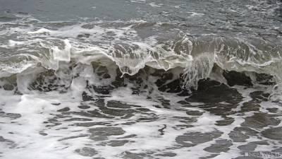 Коронавирус подавили веществом из водорослей Японского моря