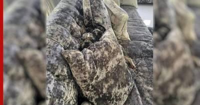 Собаки с необычным окрасом научились прятаться от хозяев, сливаясь с диваном