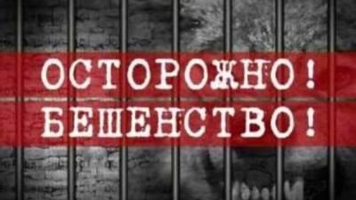 Бешенство в Саратовской области: из-за кота и собаки закрыты еще два района