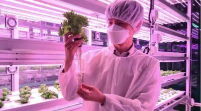 Скоро появятся съедобные вакцины из растений
